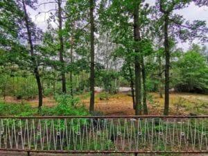 Bungalow - Blick von Terrasse